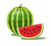Isolerad vattenmelon royaltyfri illustrationer