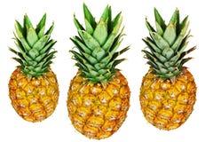 isolerad white för ananas tre Fotografering för Bildbyråer