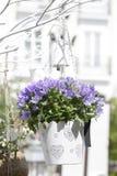 isolerad white för bakgrund blomkruka Arkivbild