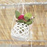 isolerad white för bakgrund blomkruka Arkivfoton