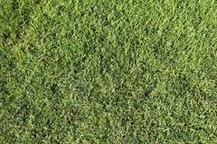 isolerad white för bakgrund gräs Arkivbild