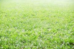isolerad white för bakgrund gräs Arkivfoton