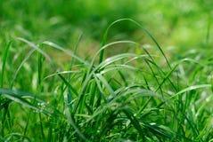 isolerad white för bakgrund gräs Arkivbilder