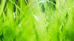 isolerad white för bakgrund gräs Arkivfoto