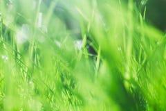 isolerad white för bakgrund gräs Royaltyfria Bilder