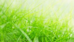 isolerad white för bakgrund gräs Royaltyfri Fotografi