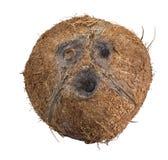 isolerad white för bakgrund kokosnöt Royaltyfri Bild