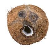 isolerad white för bakgrund kokosnöt Arkivfoton