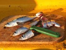 isolerad white för bakgrundsbete fiske arkivbild