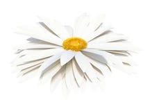 isolerad white för chamomile blomma vektor illustrationer