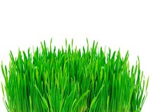 isolerad white för gräs green arkivfoto