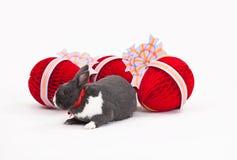 isolerad white för kanin easter Arkivbild