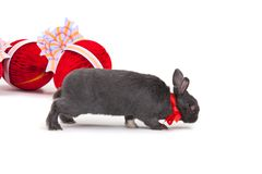 isolerad white för kanin easter Royaltyfria Foton