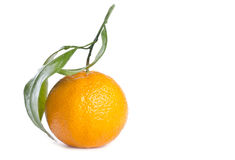 isolerad white för satsuma för mandarinorange arkivfoto