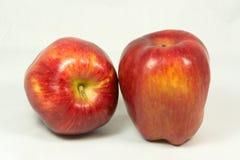 Isolerade äpplen. Royaltyfria Foton