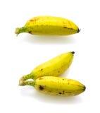 Isolerade bananer. Arkivbilder