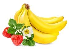 Isolerade bananer och jordgubbar Royaltyfria Foton