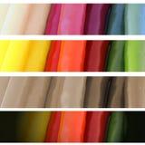4 isolerade banret storleksanpassade foto av färgrika chilipeppar Royaltyfria Foton
