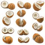 Isolerade bilder av kokosnötter Arkivbilder