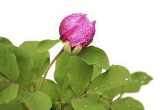 isolerade blommor Fotografering för Bildbyråer