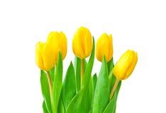 isolerade blommor Arkivbild