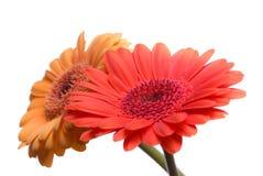 Isolerade blommor royaltyfri foto