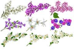 isolerade blommor Royaltyfri Bild