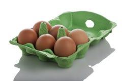 isolerade bruna ägg för ask deras sex Royaltyfria Foton