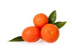 Isolerade Clementines Royaltyfria Foton