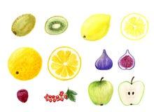Isolerade den utdragna vattenfärgen för handen fruktuppsättningen royaltyfri illustrationer
