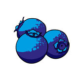 Isolerade drog frukter för blåbär hand Royaltyfria Bilder