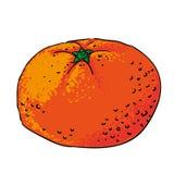 Isolerade drog frukter för tangerin hand Arkivbilder