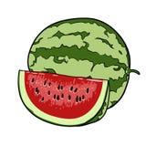 Isolerade drog frukter för vattenmelon hand Arkivbild