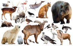 Isolerade europeiska djur Royaltyfria Bilder