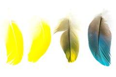 Isolerade fågelfjädrar royaltyfria bilder