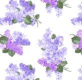 Isolerade filialer av lilor på en vit bakgrund stock illustrationer