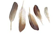 isolerade fjädrar arkivbild