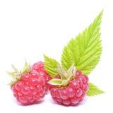 Isolerade frukter för rött hallon Royaltyfria Bilder