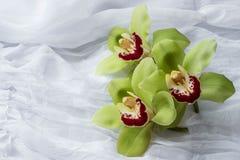 Isolerade gröna orkidér - - vit bakgrund Fotografering för Bildbyråer