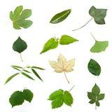 Isolerade gröna sidor av olika träd Royaltyfri Bild