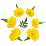 Isolerade gula ängblommor Royaltyfria Bilder