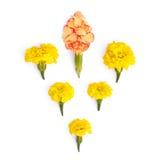 Isolerade gula ängblommor Royaltyfri Bild