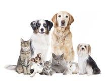 Isolerade hundkapplöpningkatter royaltyfri bild