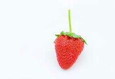1 isolerade jordgubbe Arkivfoton