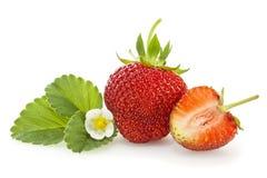 Isolerade jordgubbe, blad och blomning Royaltyfri Foto