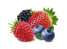 Isolerade jordgubbe, hallon, björnbär och blåbär Arkivfoto