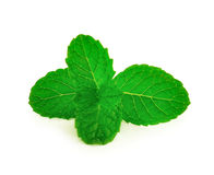 isolerade leaves mint white Royaltyfri Bild