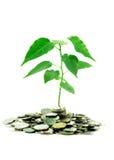 Isolerade mynt och växt arkivfoton