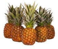 Isolerade nya ananas Royaltyfri Bild