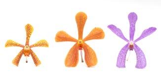 Isolerade orkidér Royaltyfri Fotografi